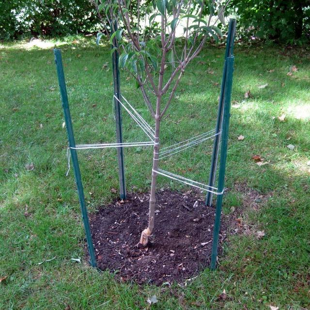 find more 5ft metal tree support stakes x7 for sale at up to 90 off