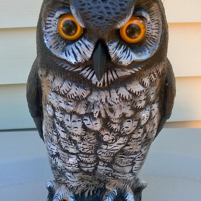 Plastic Owl To Scare Away Mice And Birds From House Docks Or Just For Garden Decoration