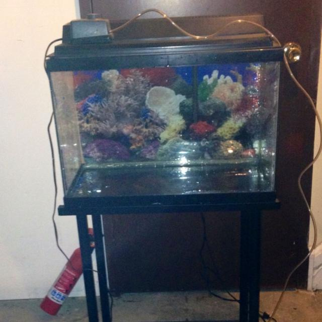 20 Gallon fish tank with black metal stand