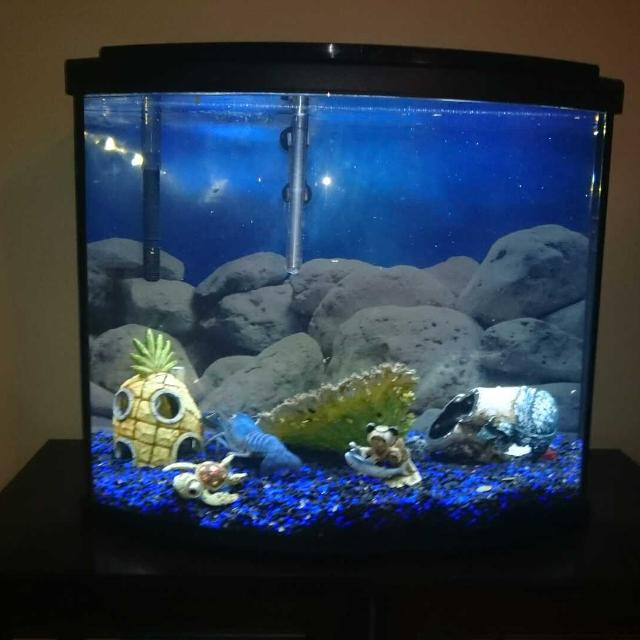 Best 26 gallon bow front fish tank for sale in airdrie for How much is a fish tank