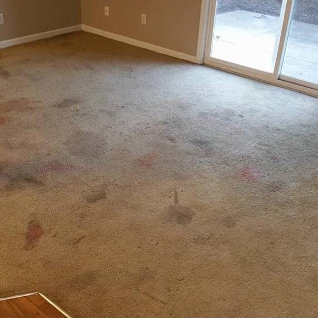 Best Carpet S In San Antonio Carpet Vidalondon