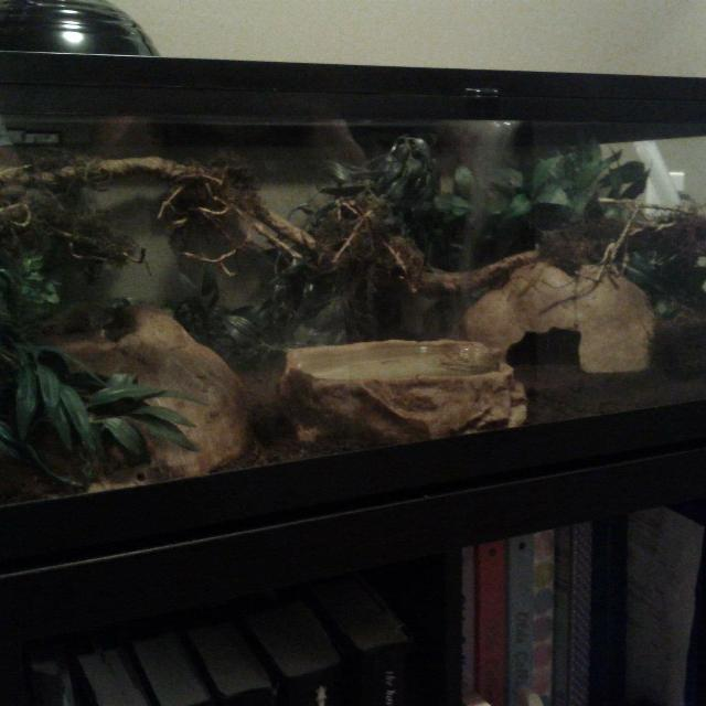 Find More Large Reptile Terrarium For Sale At Up To 90 Off