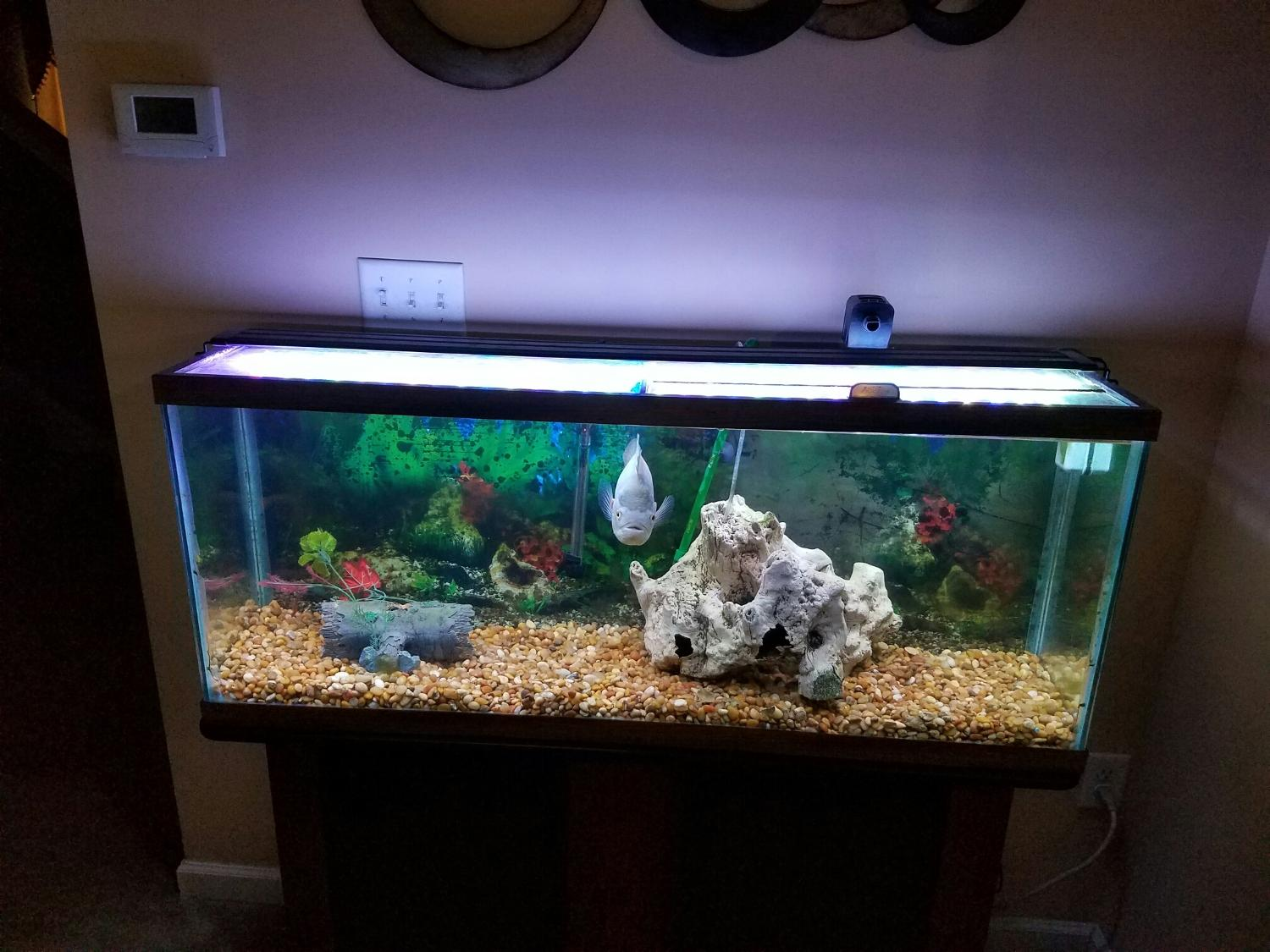 Best 55 Gallon Pet Fish Tank For Sale In Cecil County