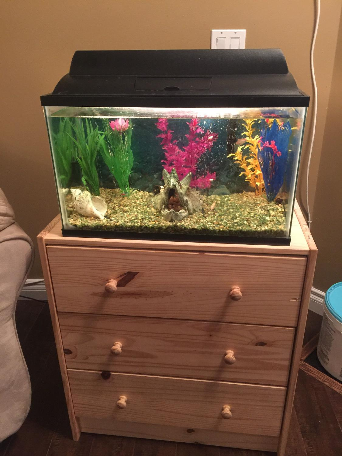 Find more 10 gallon fish tank with 5 fish and 2 snails for for 10 gallon fish tank for sale