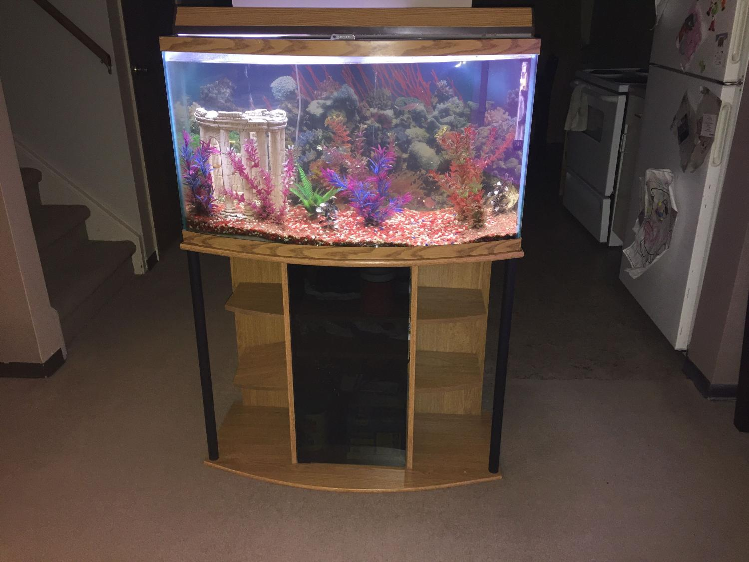 Find More 35 Gallon Fish Tank And Stand For Sale At Up To