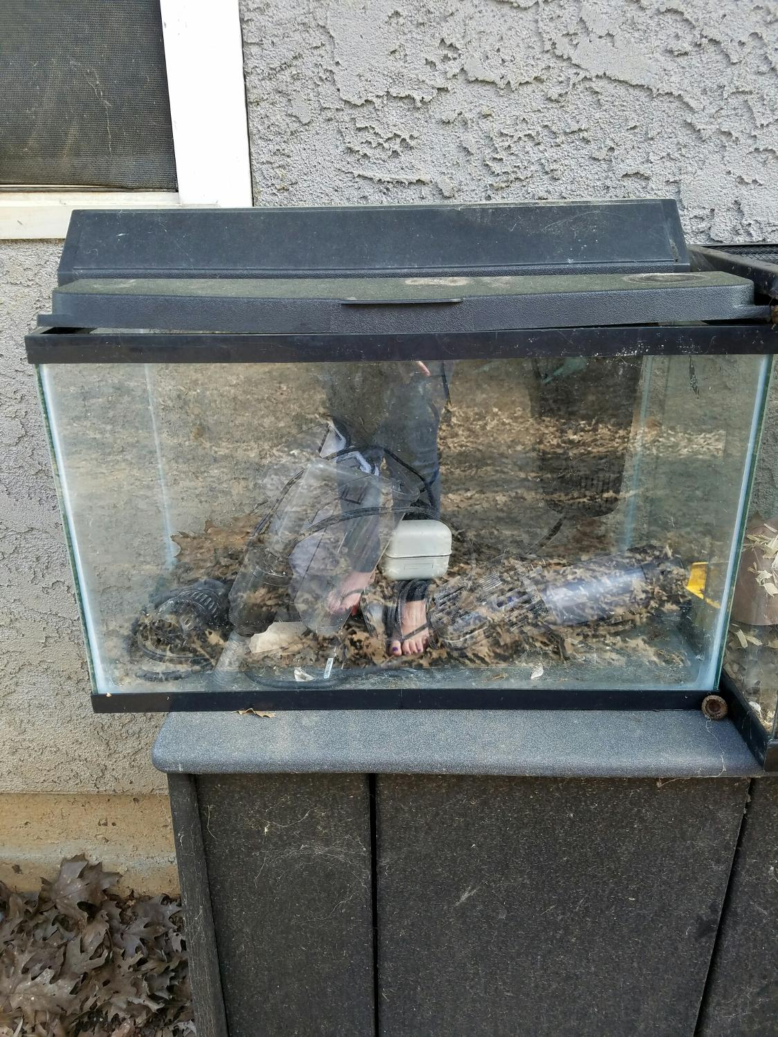Find more 10 gallon fish tank complete set up for sale at for 90 gallon fish tank for sale