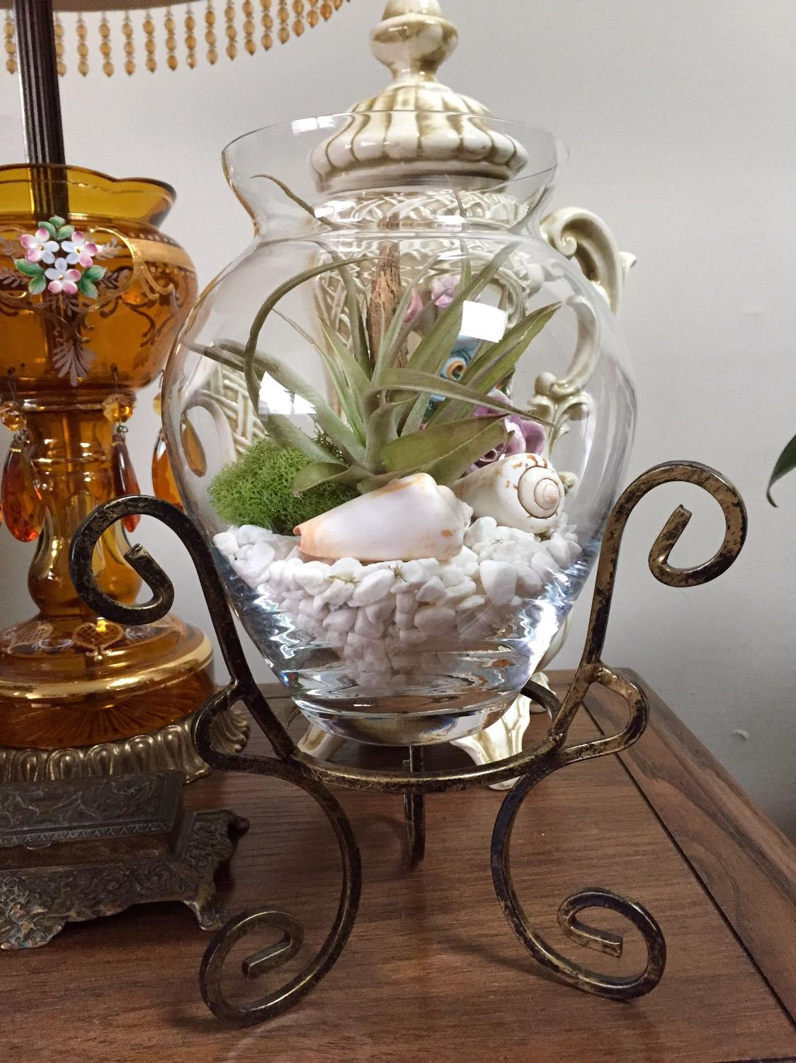 Find More Large Air Plant In A Clear Glass Vase Embedded With White Rocks Moss Drift Wood And